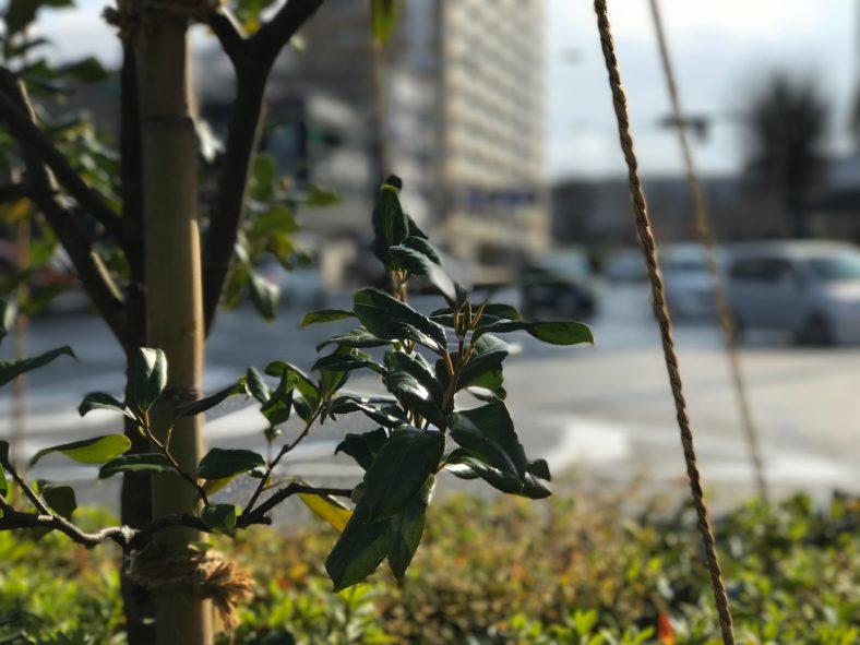 3.11〜札幌と東京の温度差