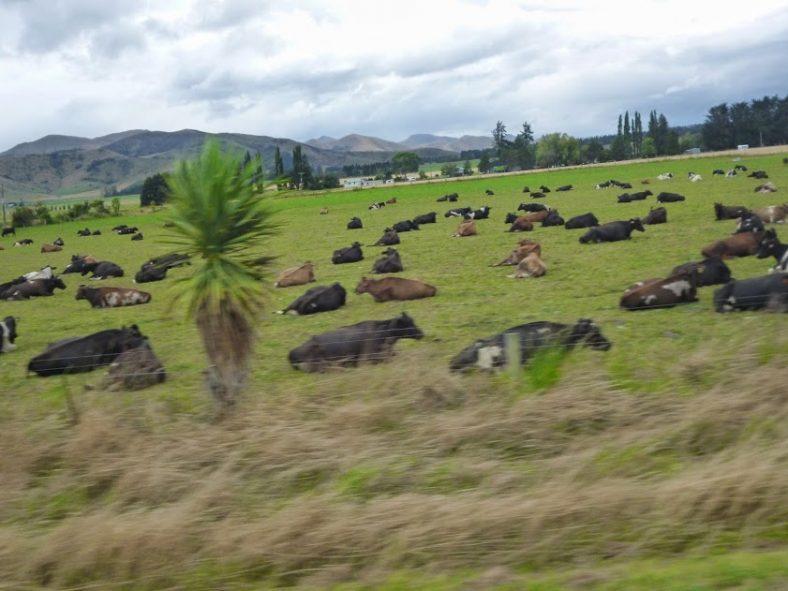 ニュージーランドで働く Vol.7 NZの看護学校へ進学