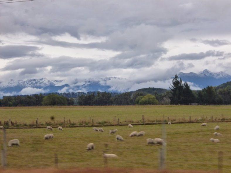 ニュージーランドで働く Vol.3 看護実習 その1