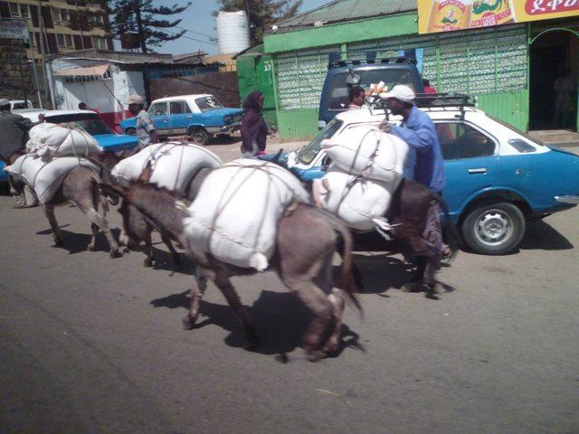 アフリカで生きる  in エチオピア